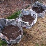 Potatoes Planted in Cages