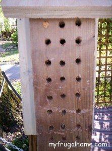 We Have Mason Bees!