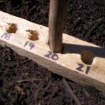 Seed Planting Ruler