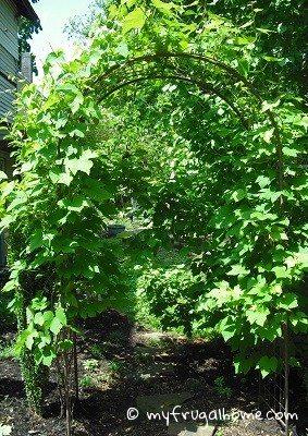 Arbor Before