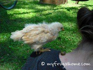 Chick Poop