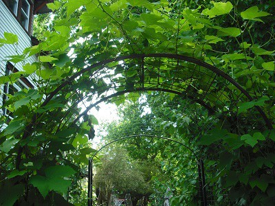 Garden Arbor Turned Into a Garden Tunnel