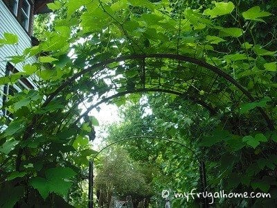 Garden Arbor Turned Garden Tunnel