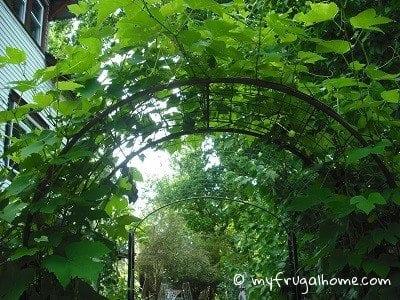 Garden Arbor Turned Garden Tunnel