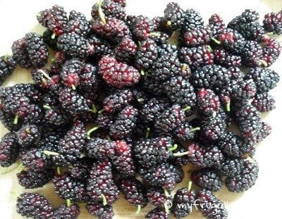 Foraging Find: Mulberries