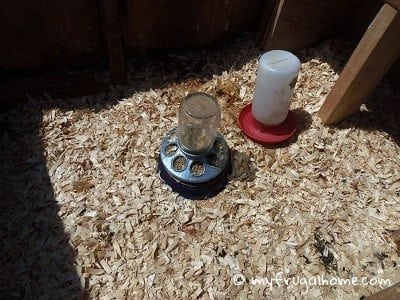 Chickens and The Deep Litter System