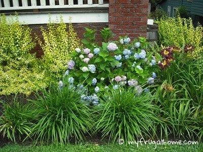 June in My Garden