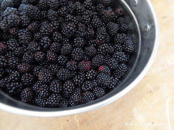 Bucket of Blackberries