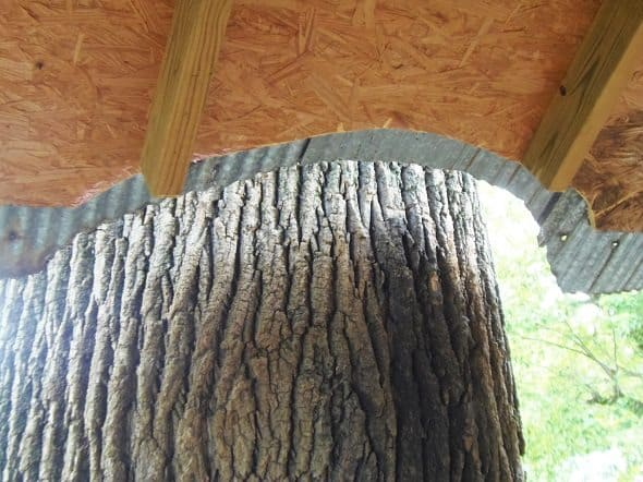 Treehouse Roof Built Around Trees