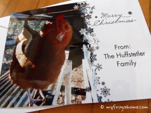 Chicken Christmas Card