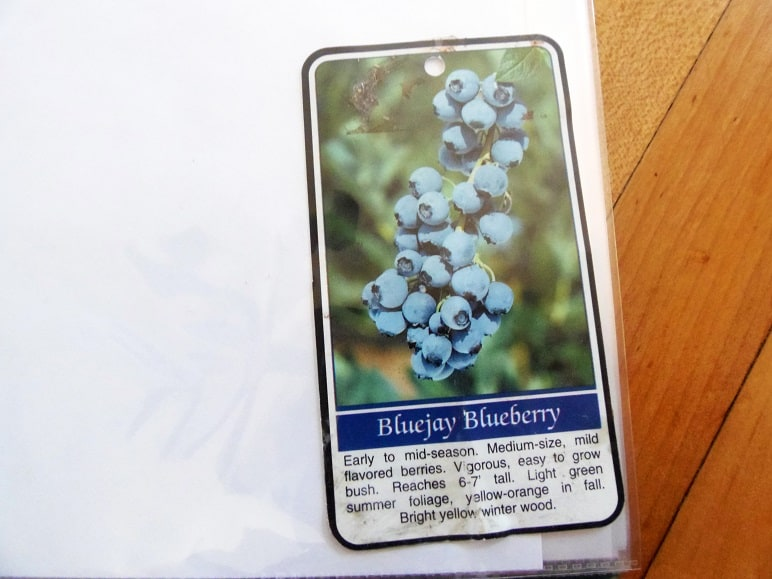 Bluejay Blueberry Plant Tag
