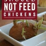 Things You Should Not Feed Your Chickens