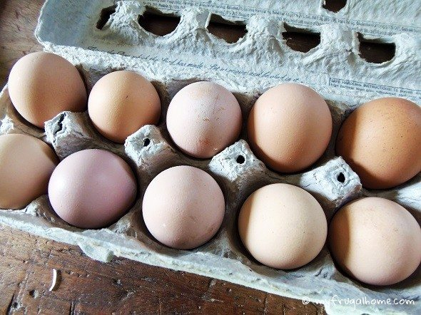 How to Store Fresh Eggs