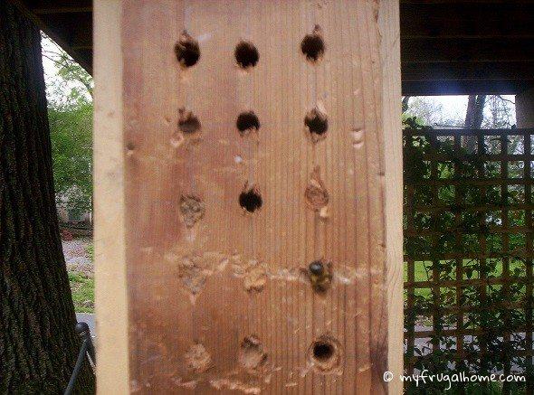 Mason Bee Nests