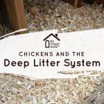 Deep Litter System in Chicken Coop