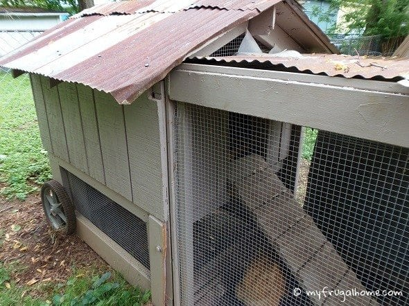 How to Get Chickens to Use Their Coop