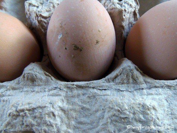 Dirty Egg
