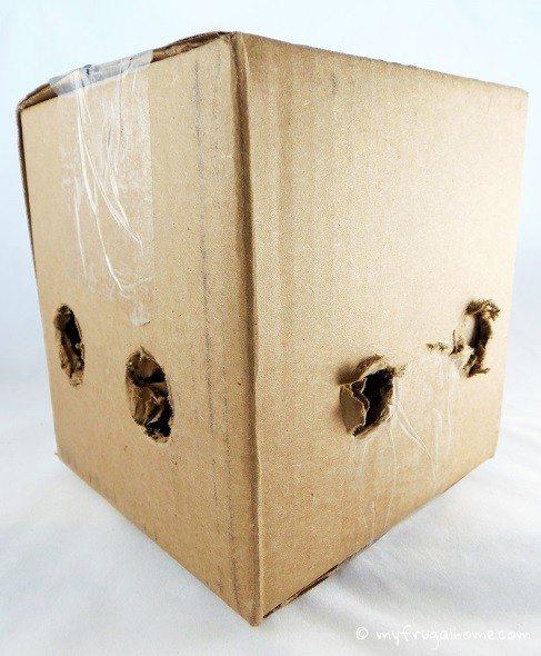 Box of Ladybugs