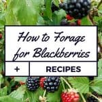 How to Forage for Blackberries
