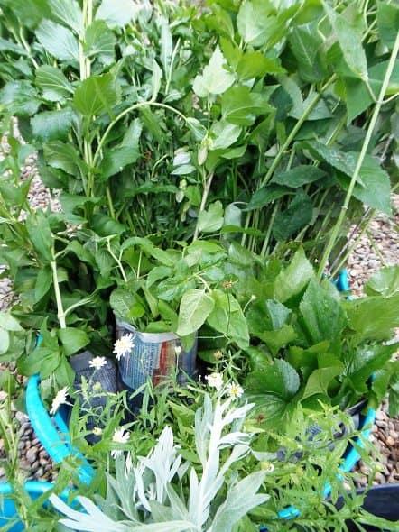 Free Plants