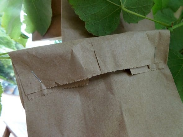 How to Bag Grapes