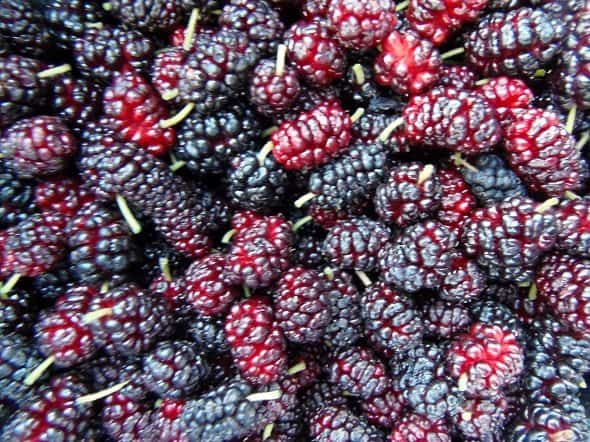 Mulberries - Closeup