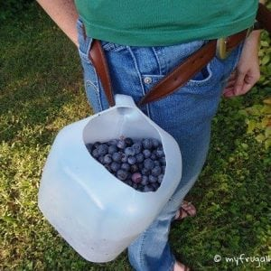 How to Make a Hands-Free Berry Picking Bucket