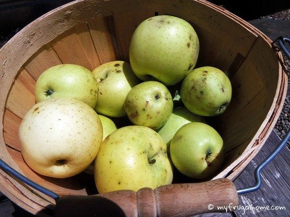 Free Fall Apples