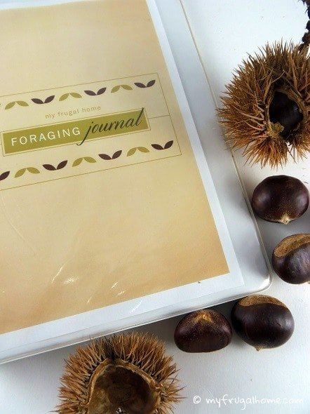 Foraging Journal
