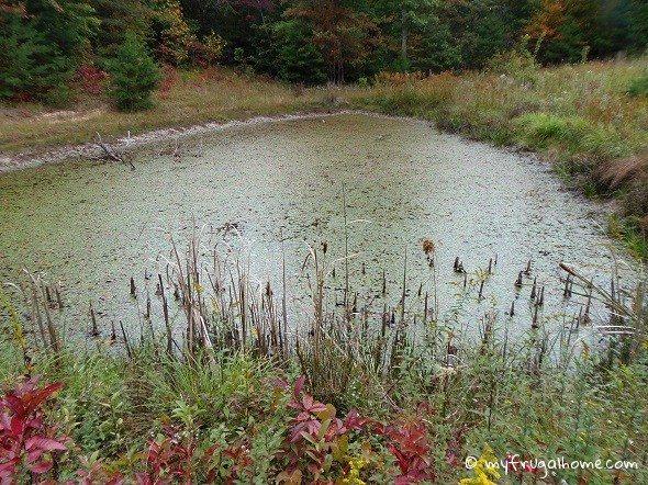 Pond Closeup