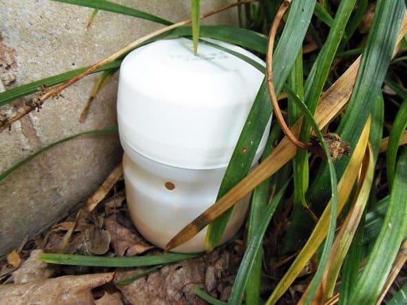 Ant Bait Trap Placed Outdoors
