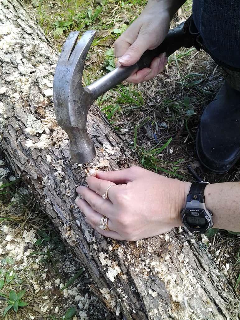 Hammering in Mushroom Plugs