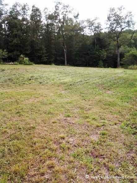 Mowed Field
