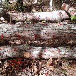 Mushroom Log Tower