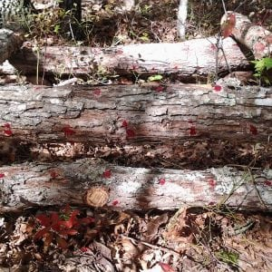How to Grow Mushrooms on Logs
