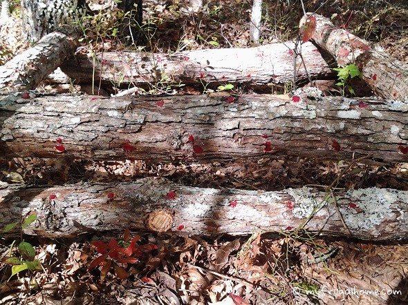 How to Grow Mushrooms on a Log