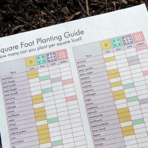 Square Foot Planting Guide