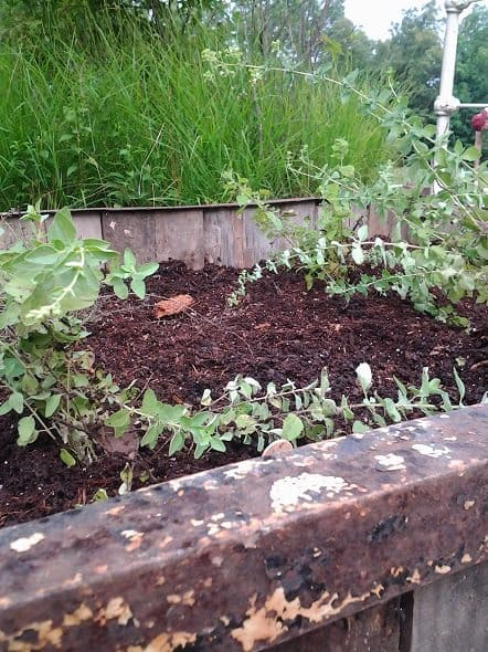 Top of Raised Bed