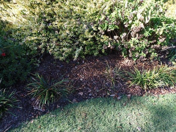 Mulching with Leaves