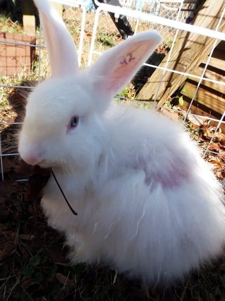 Rabbit Eating Leaves