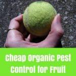 Homemade Fruit Pest Trap