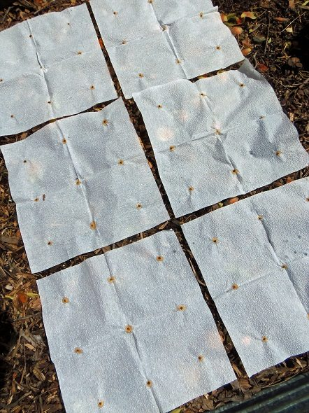 Square Foot Garden Seed Mats