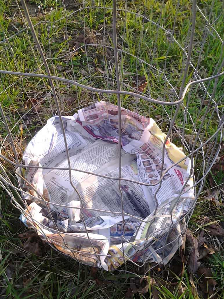 Line Potato Cages With Wet Newspaper