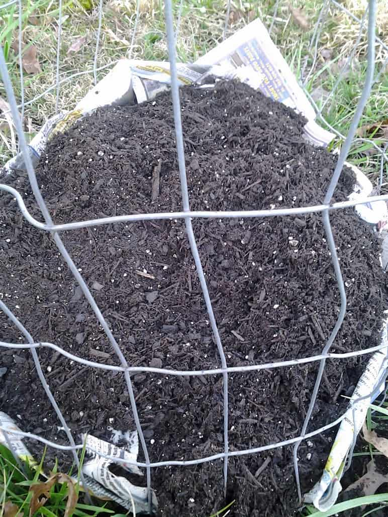 Potatoes Covered With Soil