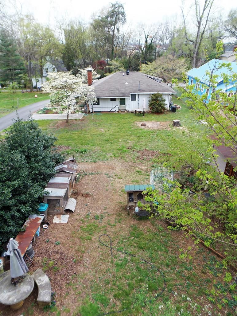 Backyard in Transition
