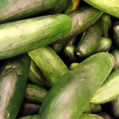 When to Pick Cucumbers