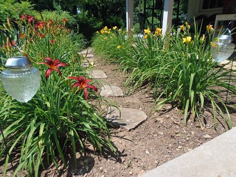 Garden Path With Daylillies