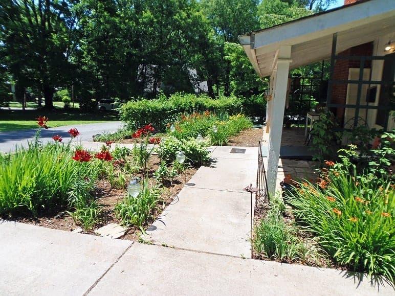 Office Garden Side Yard in June