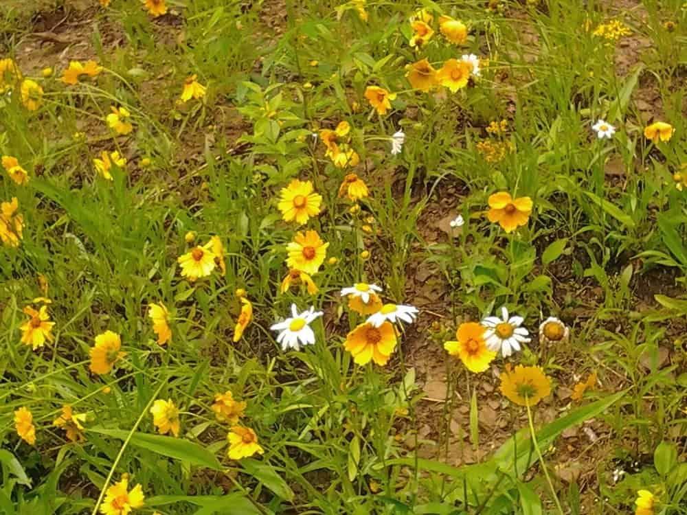 How to plant a wildflower meadow mightylinksfo