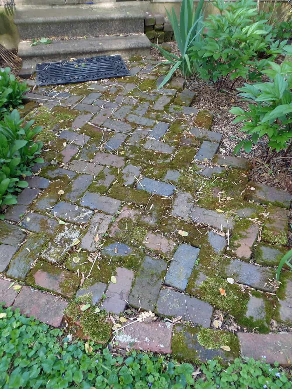 Herringbone Brick Sidewalk With Moss Growing on It